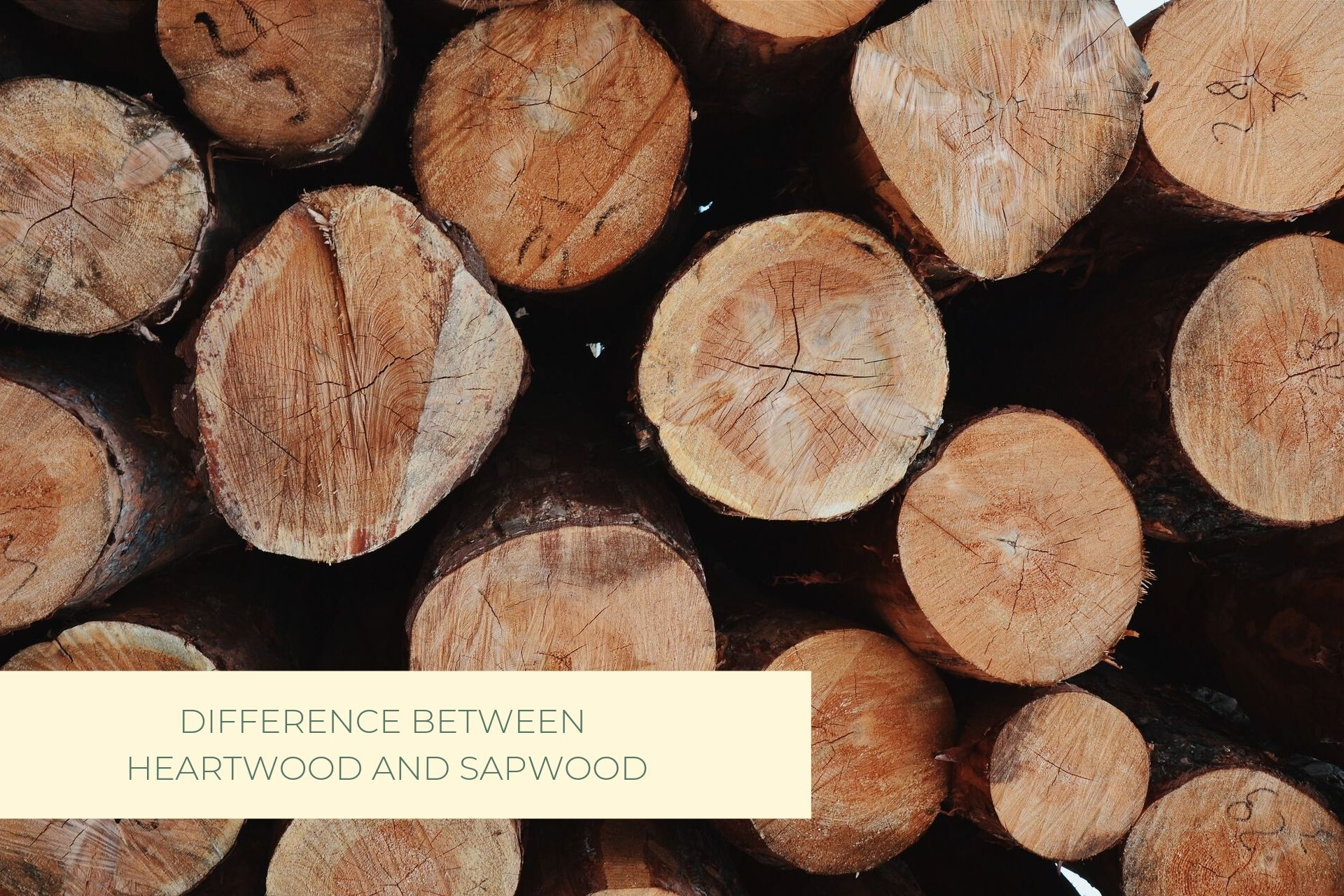 Castle Bespoke_ Difference between Heartwood and Sapwood