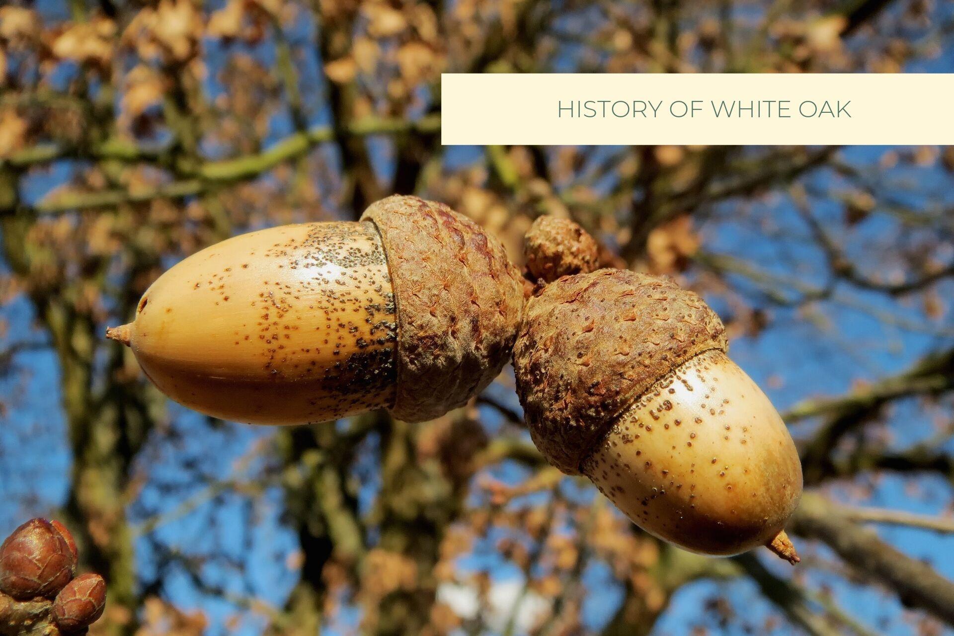 Castle Bespoke_ History Of White Oak